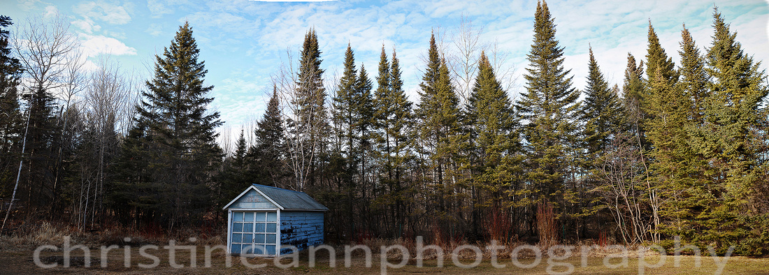 pine trees panoramic in Duluth MN