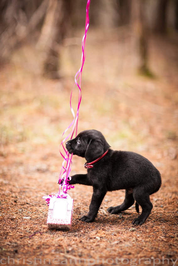 Couples maternity gender reveal with puppy dog hartley  nature center Duluth MN photographer